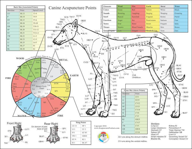 Dog Acupressure / Acupuncture Chart 8 5