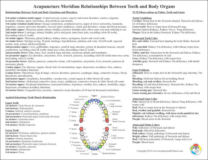 Acupuncture Meridian Relationships Between Teeth and Body Organs Chart 8 5
