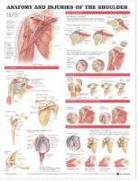anatomyandphysiologyexamdigestivesystem