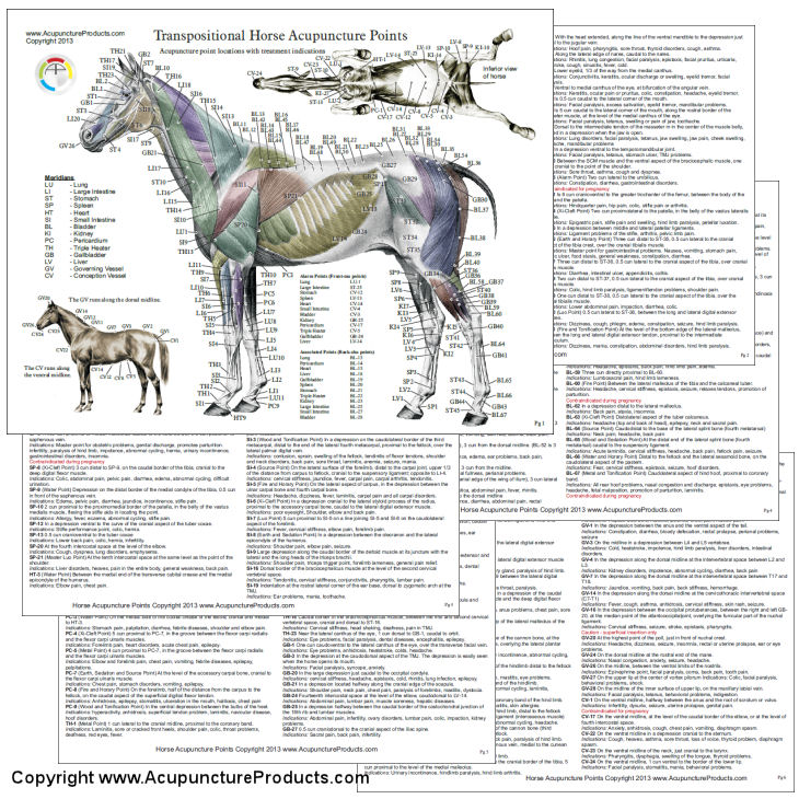 Horse Acupuncture Laminated Chart