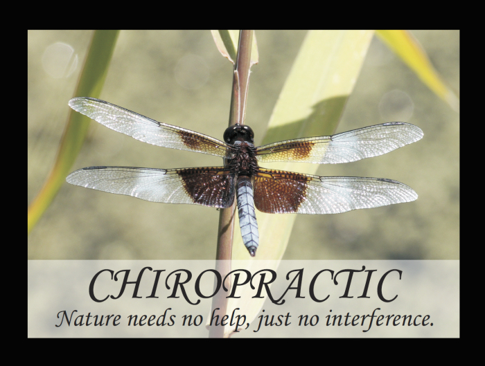 chiropractic nature quote poster