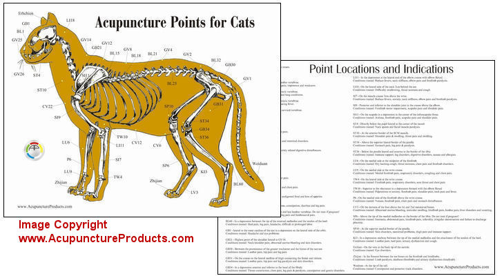 acupressure point chart: Cat feline acupuncture acupressure points chart