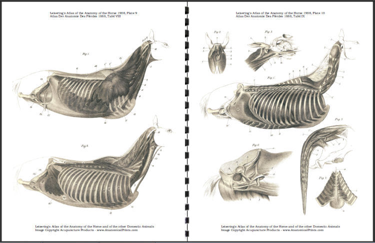 Vol 1 Leiserings Atlas Of The Anatomy Of The Horse