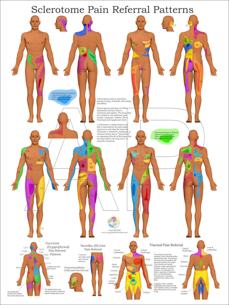 Anatomy posters for sale