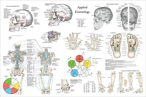 Applied Kinesiology Poster