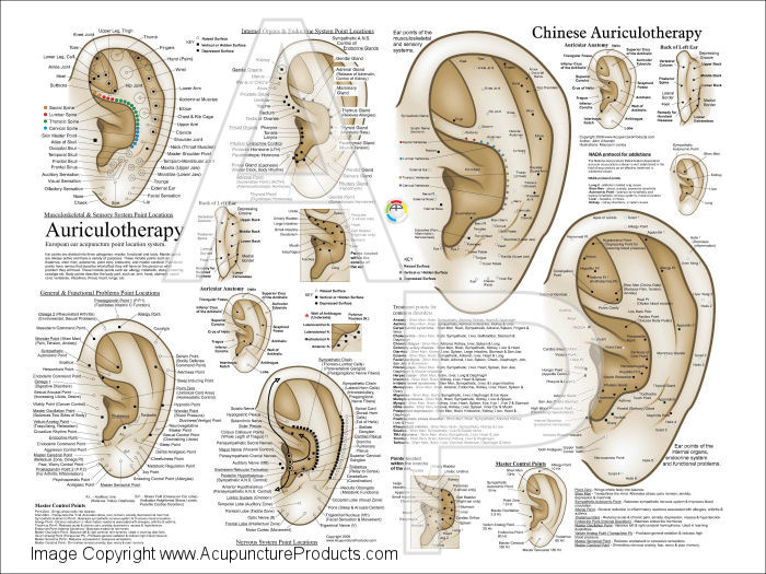 European auriculotherapy ear acupuncture poster auriculotherapy ear acupuncture points poster ccuart Image collections