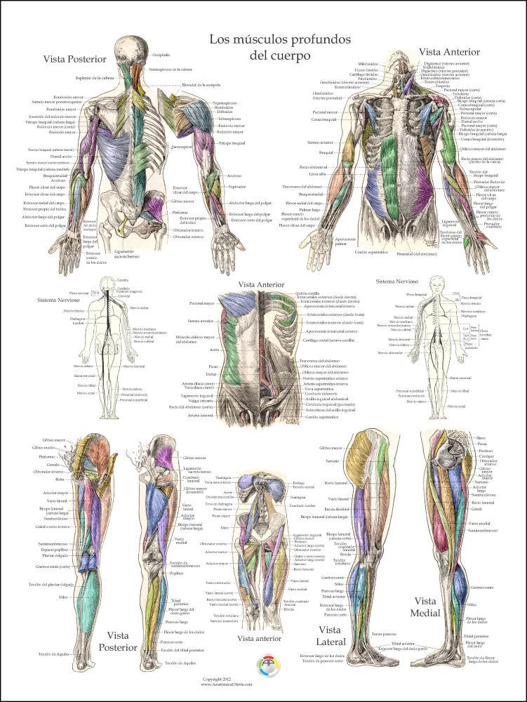 Erfreut Anatomie Des Bauchfettes Bilder - Anatomie Ideen - finotti.info